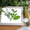 Check fresh herbs with the Bug Checker
